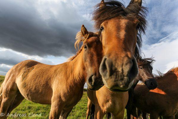 2 Pferde kuscheln