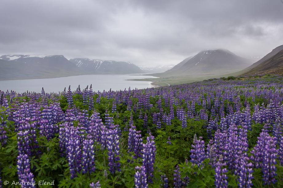 Fjord bei Þingeyri, Westfjorde
